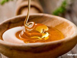 Che cos'è e a cosa serve il miele di Manuka